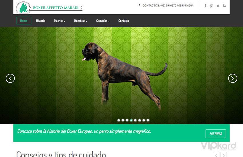 Página web - BÓXER EUROPEO ECUADOR